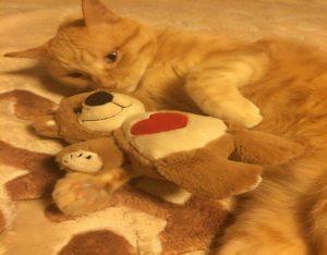 ペット保険 加入率向上と家族の安心のための日本のこれから