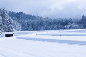 豪雪被害の補修で保険詐欺。保障内容は保険会社に必ず確認を